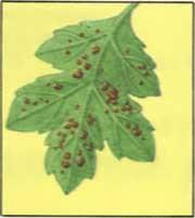как проявляют себя вредители комнатных растений